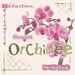 Orchidée J002 Lilipoints