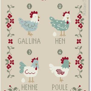 Galline 4