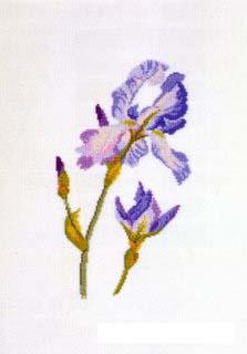 Iris bleu dmc