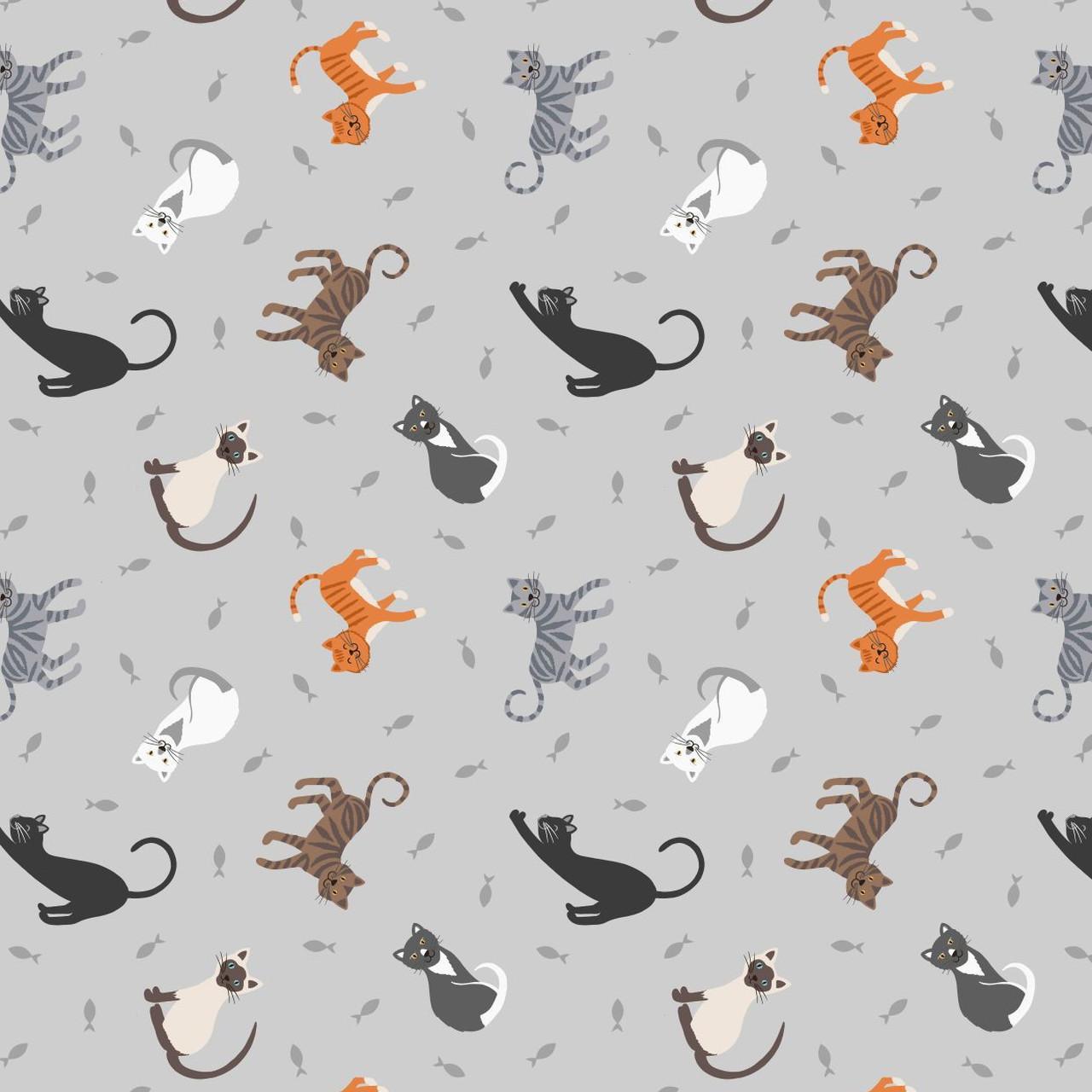 Petits chats lewis irene